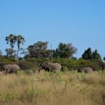 momboelephant01