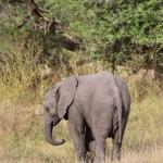 momboelephant02