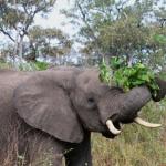 momboelephant03
