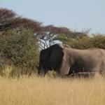 momboelephant05