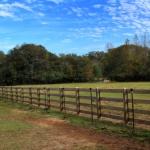 horsefarm01