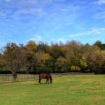 horsefarm02