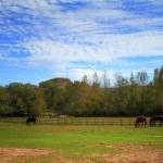 horsefarm03