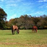 horsefarm04