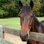 horsefarm07