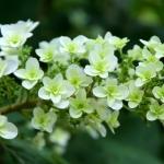 botanicalgardens05