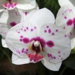 botanicalgardens17