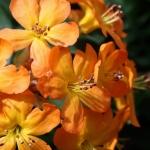 botanicalgardens21