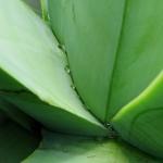 bermudaflower08
