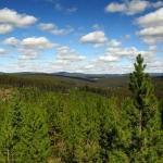 bchvforesttrees01