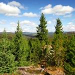 bchvforesttrees03